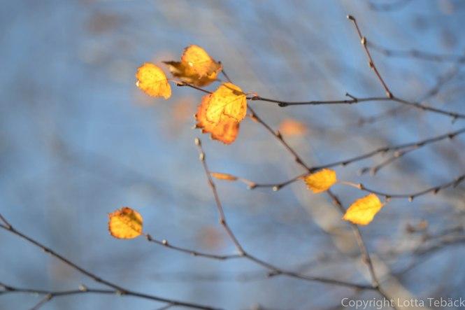 Guldiga löv