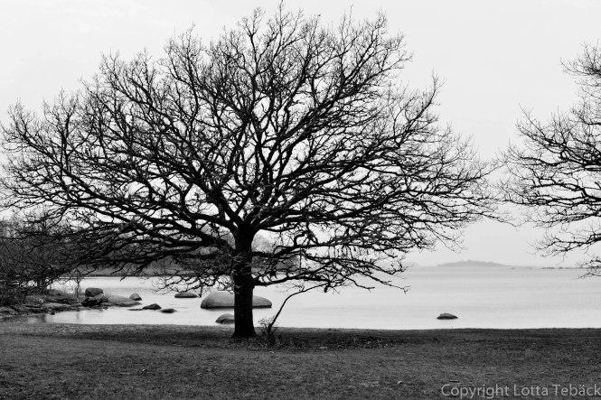 Trädet Gökalv