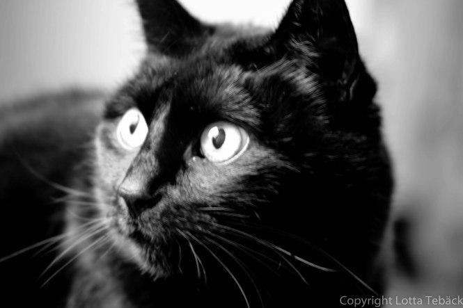 Kattögon svartvitt 2