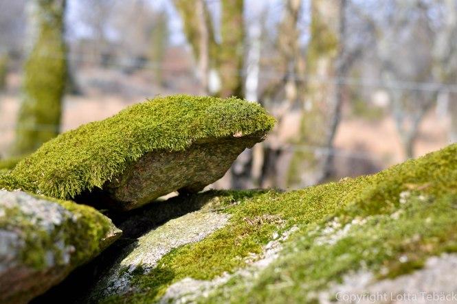 Vårljus på mossa och sten