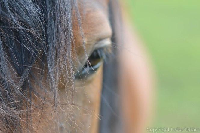 Hästman och öga