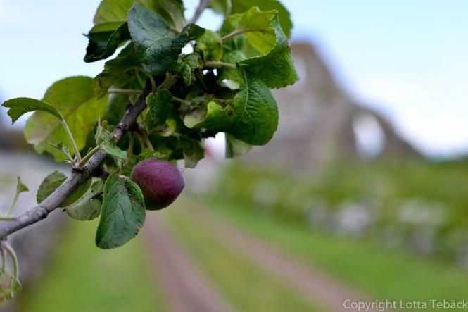 Äpple med St Knuts kapell i bakgrunden